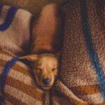 癒しが欲しいときに見る、犬のアニメーションGIF【どうぞ】